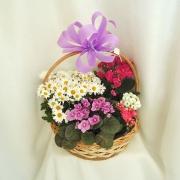 Cesta com flores plantadas