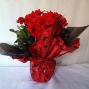 Begonia do Amor