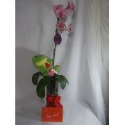 Orquidea, Sapinho, chocolate e Cartão