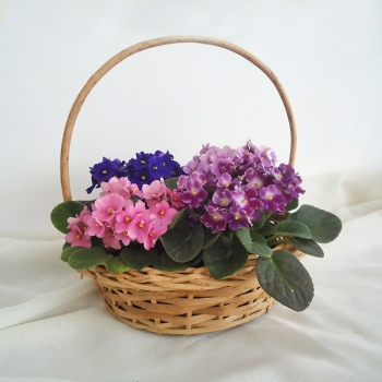 Cesta com 3 Violetas